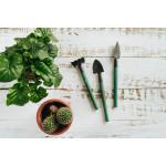 فائدة النباتات المنزلية على صحتنا وكيفية العناية بها!